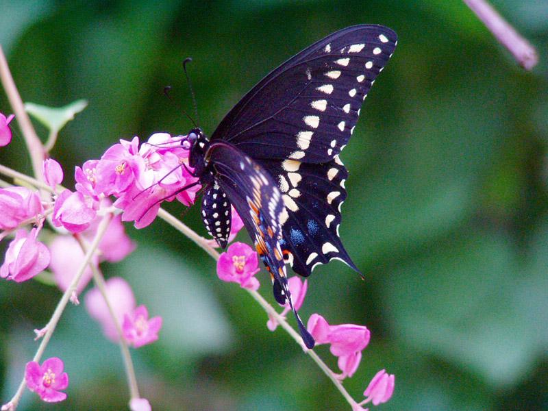 Butterflies & Marriage