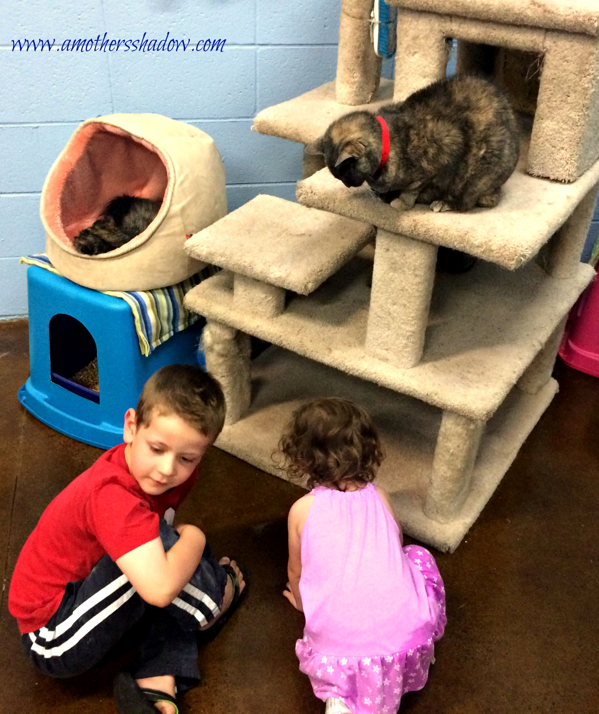 Animal Shelter 3