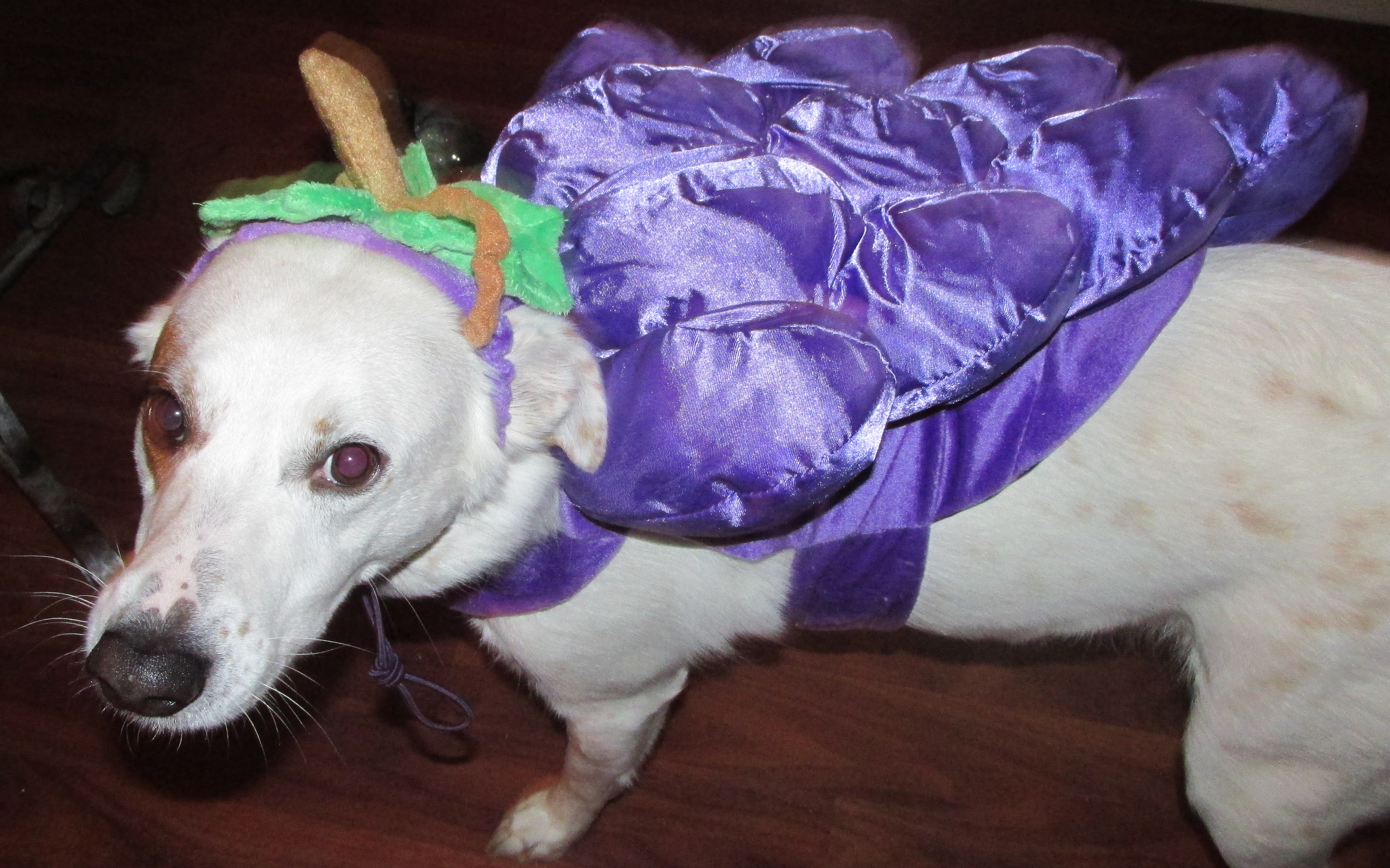 How To Keep Your Pet Safe On Halloween with these tips