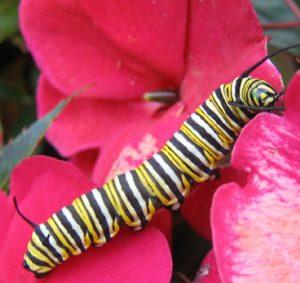 5-create-butterfly-garden-l