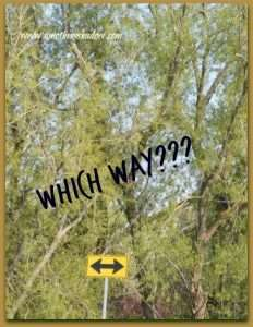Which Way 1