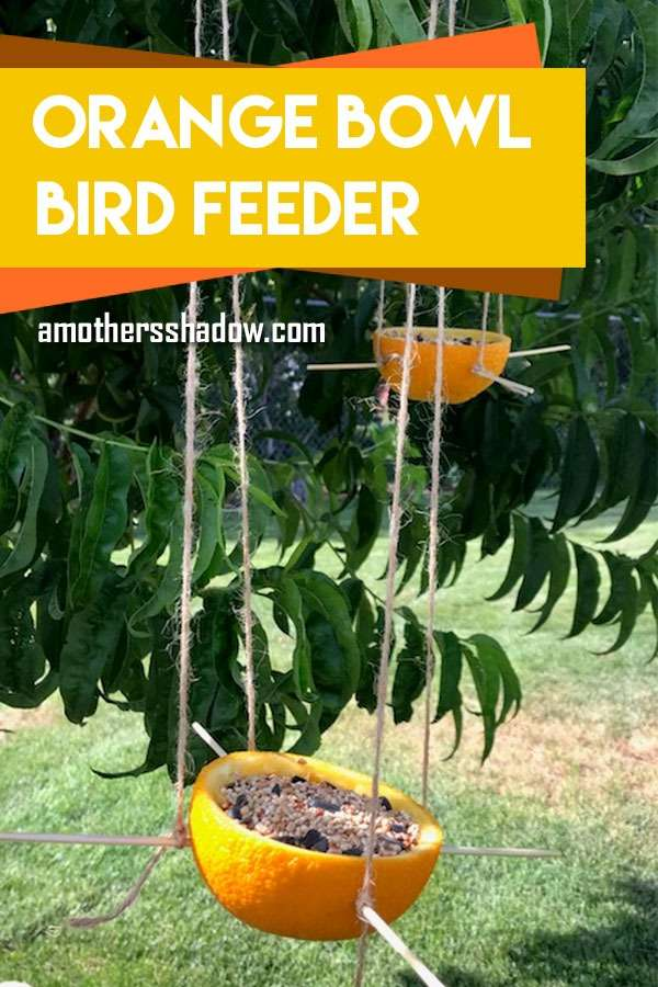 bird feeder made from a hollowed out orange peel, then filled with seeds