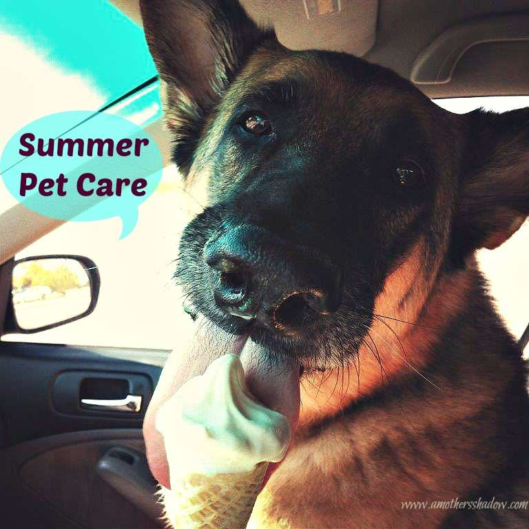 Pets how to be care for them in the Summer